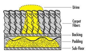 pet urine in carpet